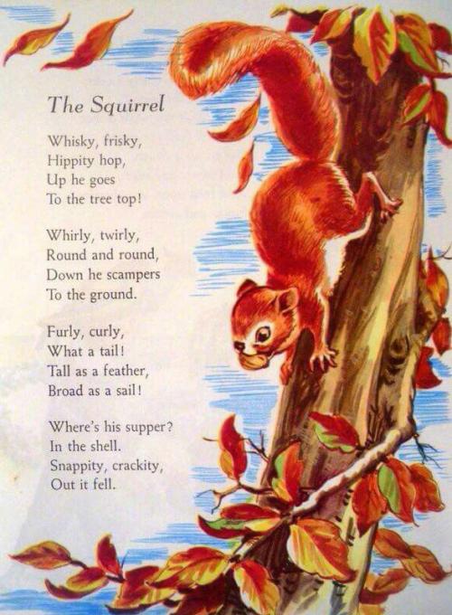 Squirrel poem