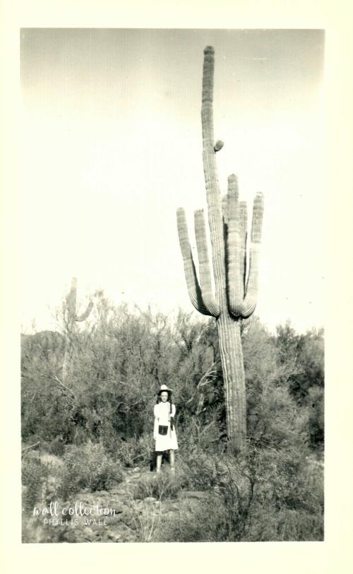 Lorena Etter cactus AZ